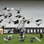 Griechische Tauben